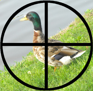 Duck on a grass bank, in the crosshairs of a rifle