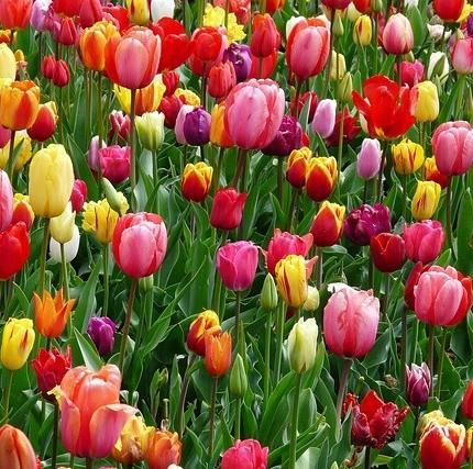 Beautiful flowers growing in a field